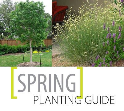Spring Planting Guide